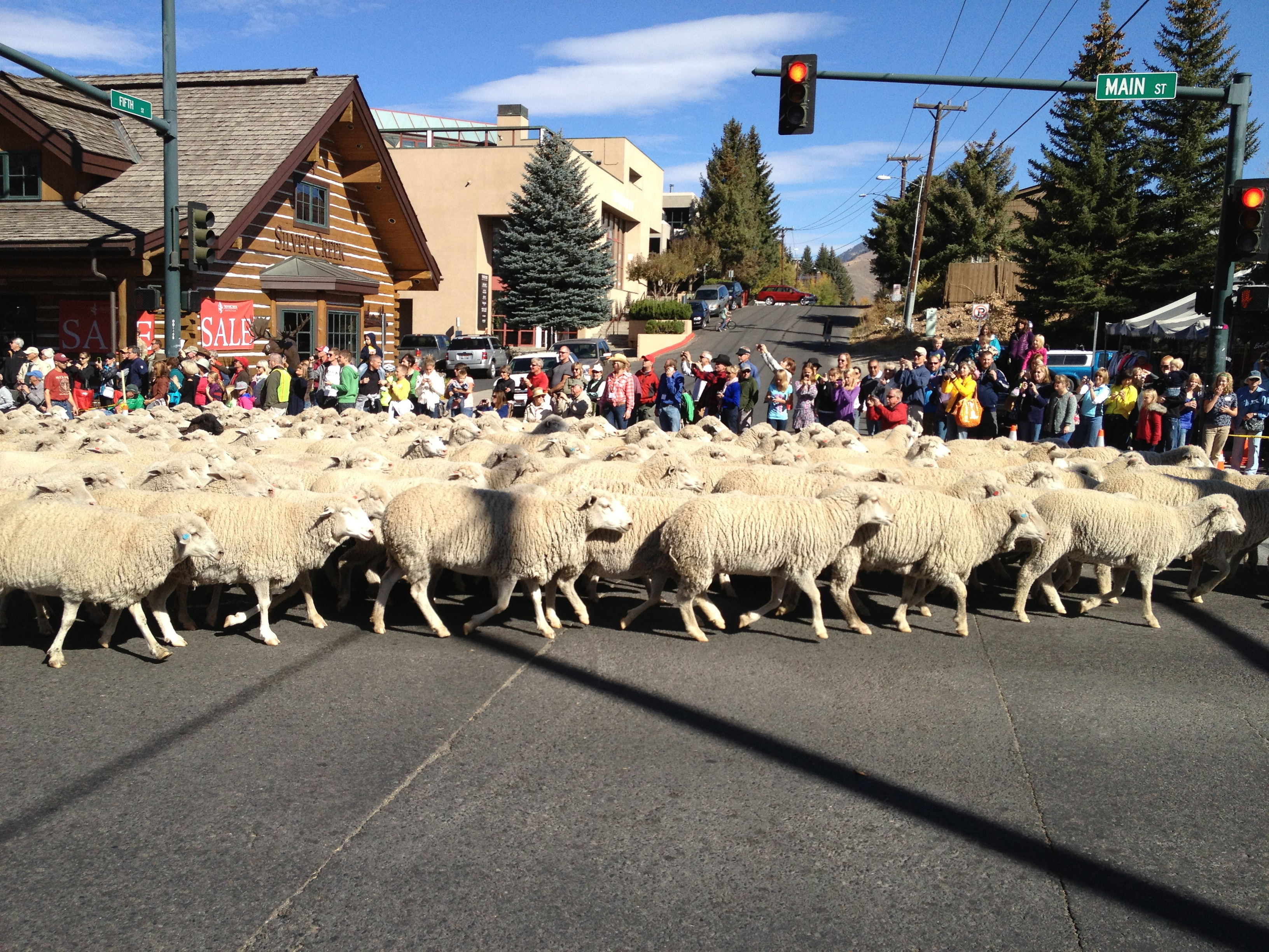 The Trailing of the Sheep